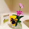 """「トイレのお花」が """"幸せ物語"""" を生み出しました。お花が繋いだ「家族愛」。"""