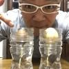 アボカドを食べたら、種は捨てずに芽吹かせて楽しんでみましょう!